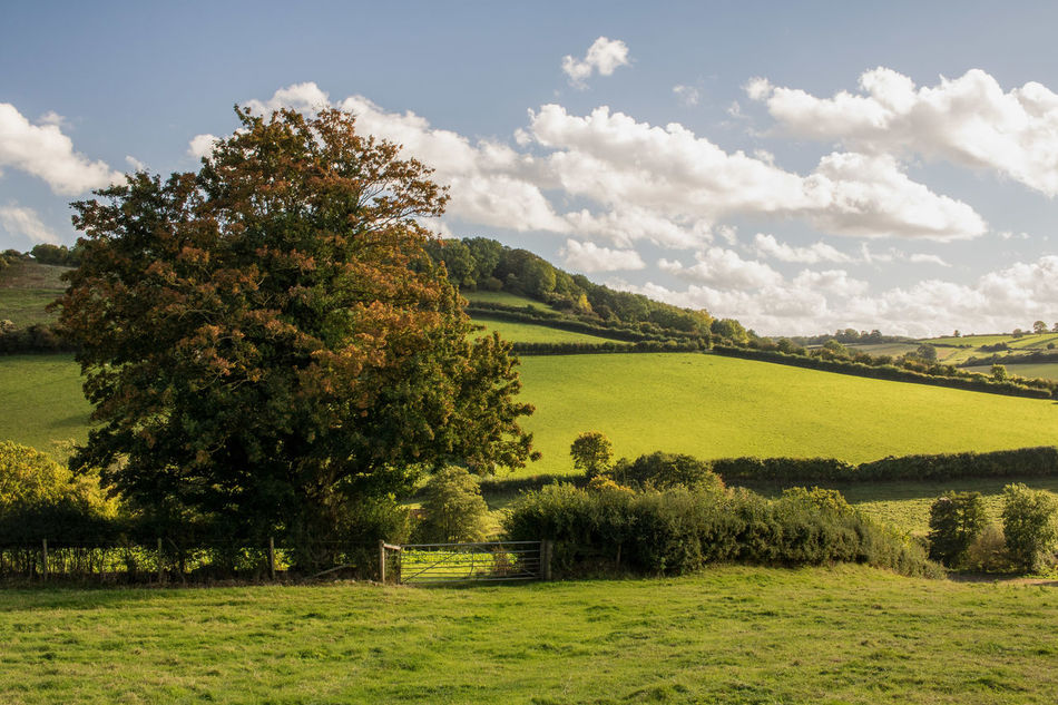 Tree Tranquil Scene Sky Landscape Agriculture Field Tranquility Rural Scene Scenics Growth Beauty In Nature Nature Crop  Cloud Flower Farm Cultivated Land Travel Destinations Green Color Yellow Wellow Somerset