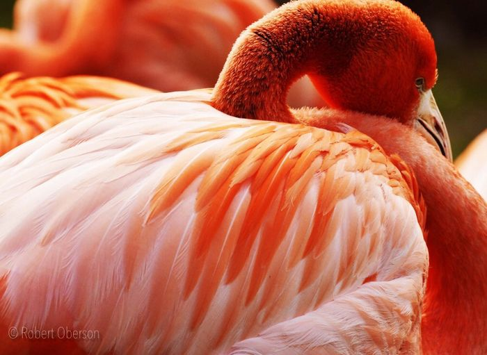 Flamingo Birds Animals Nature_collection From Where I Stand Tadaa Community Antwerpen Zoo Antwerpen