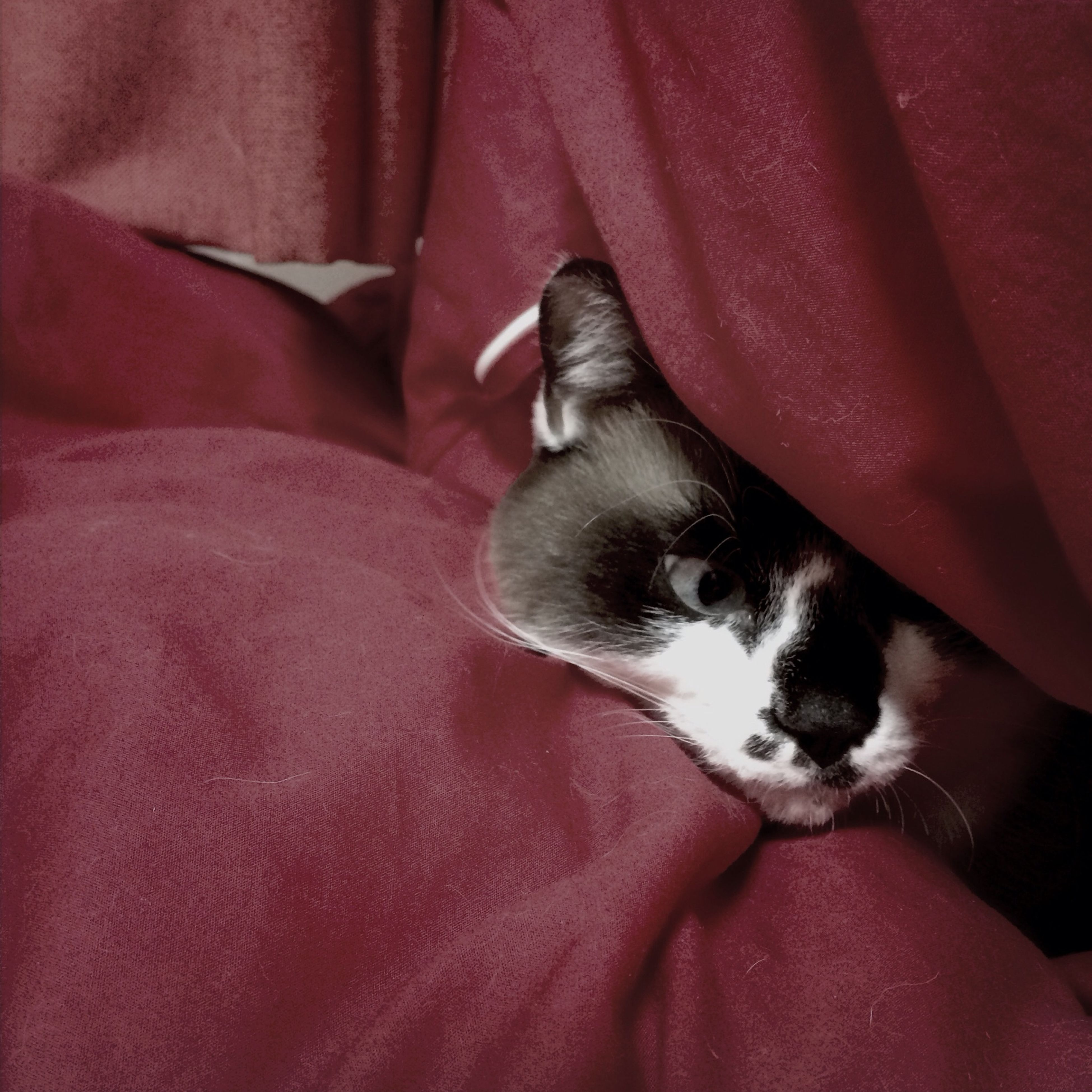 pets, domestic animals, one animal, animal themes, mammal, indoors, relaxation, domestic cat, resting, dog, cat, lying down, bed, sleeping, feline, comfortable, sofa, home interior, one person, blanket