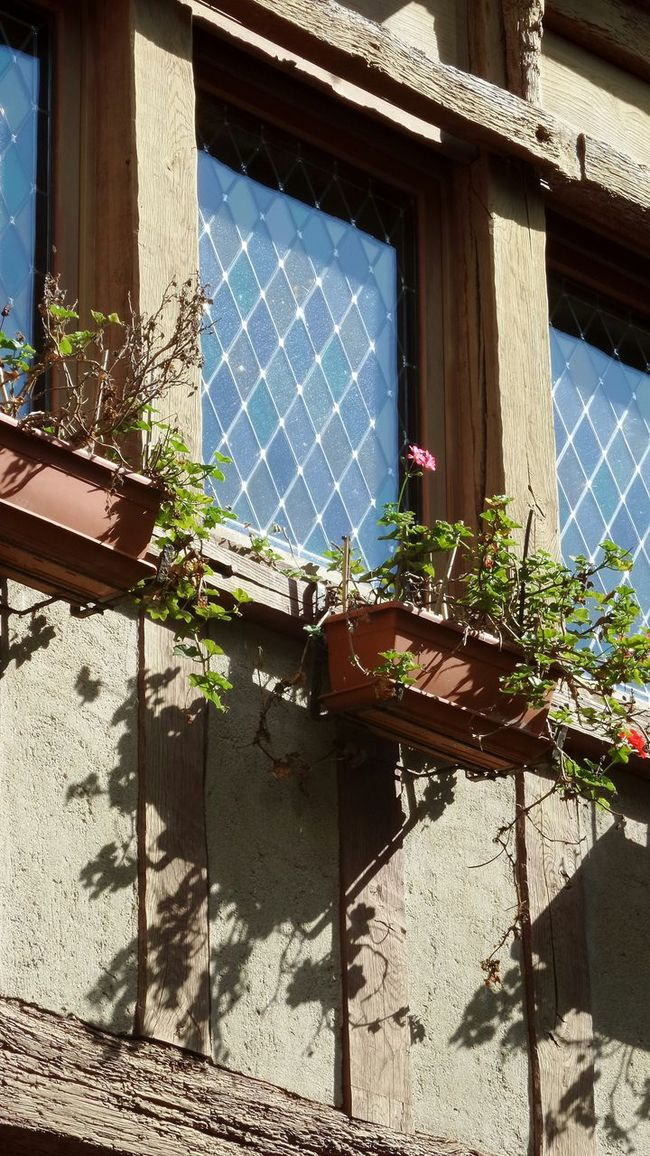 The Purist (no Edit, No Filter) Window Flowers Smartphonephotography France Bretagne Morbihan Sunny Day Saintgoustan