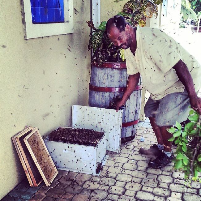 Going in the box Bees Beehive Extremenature Insects  nature