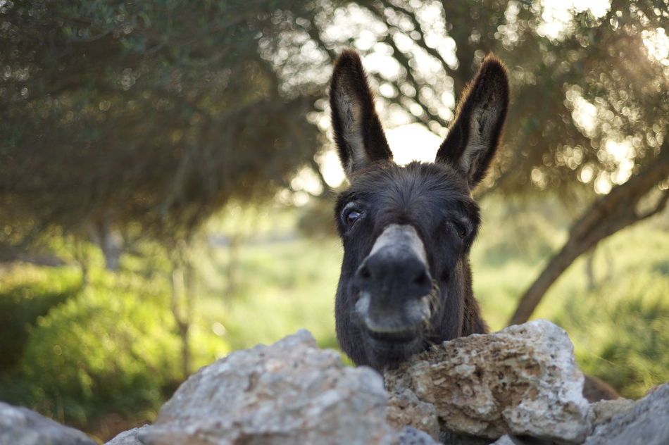 I met this friendly donkey in Spain Animal Themes Close-up Day Domestic Animals Donkey Friendly Looking At Camera Mammal Nature No People One Animal Outdoors Pets Portrait Spring Travel Travel Photography Tree Warm Wink