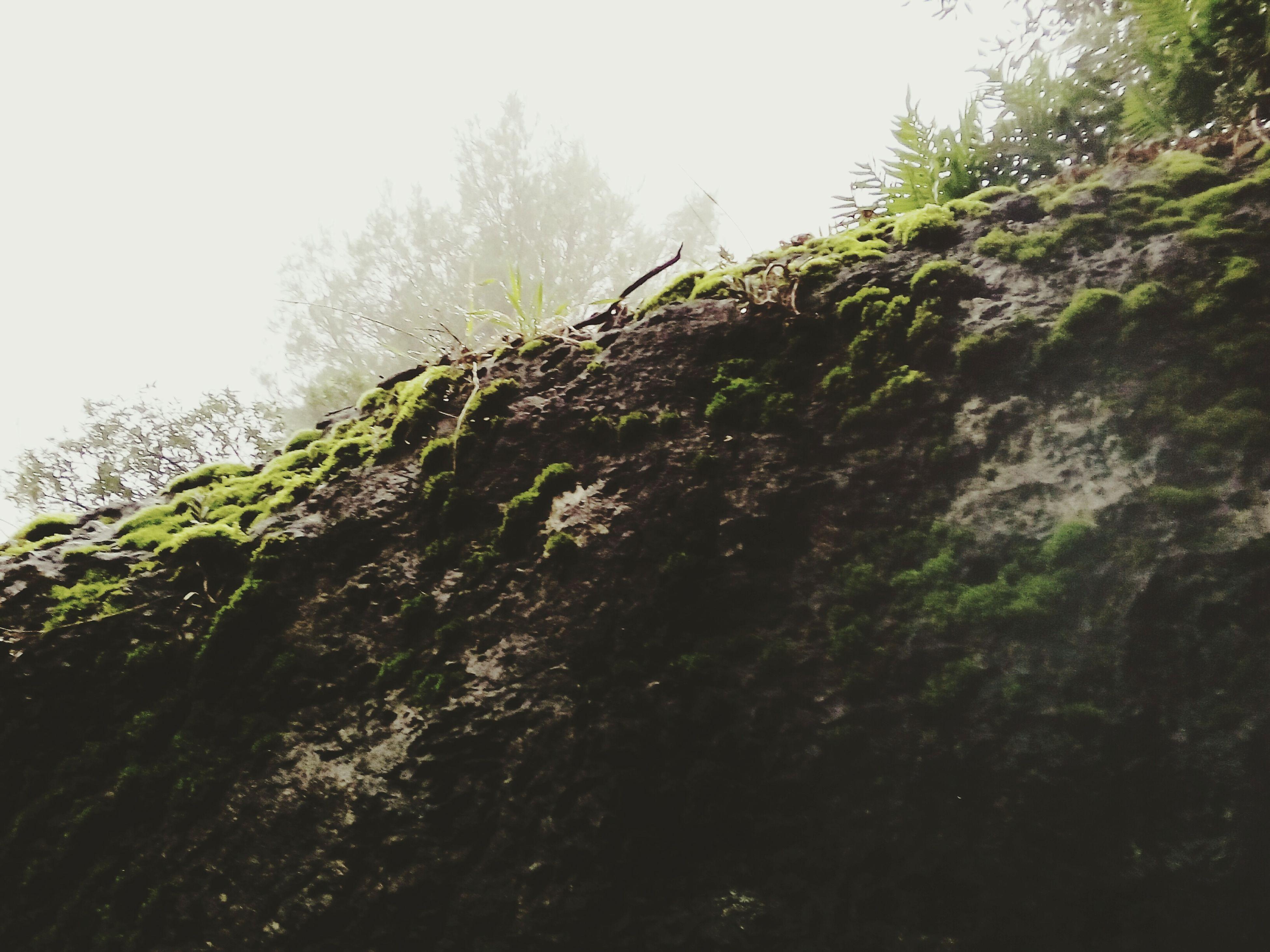 Musgo Hello World Montañas❤ Relaxing Magicriba Climb Bulder