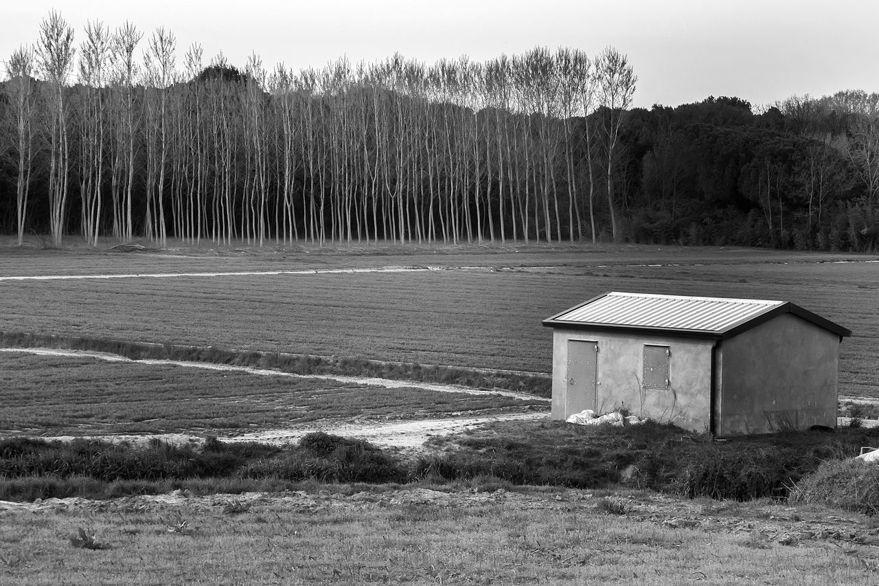 Blackandwhite Boschetto Campagna Day Field Landscape Nature Rural Scene Veneto Italy Wood Campagna Veneta