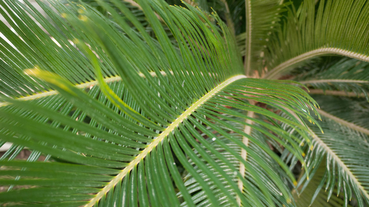 green color, leaf, growth, nature, plant, day, close-up, frond, no people, beauty in nature, outdoors, full frame, freshness, fragility