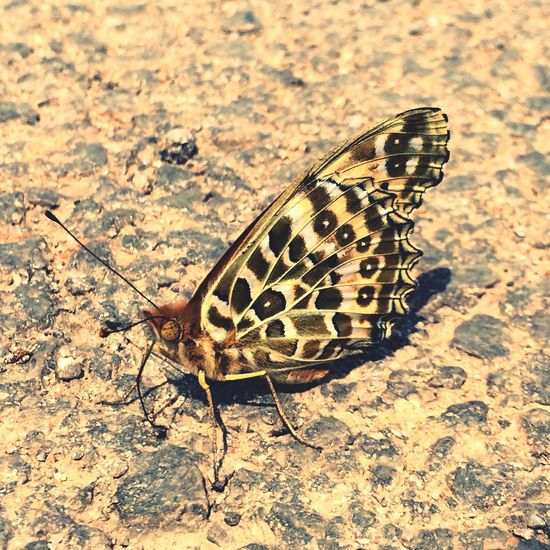 蝴蝶眨几次眼睛,才学会飞行?