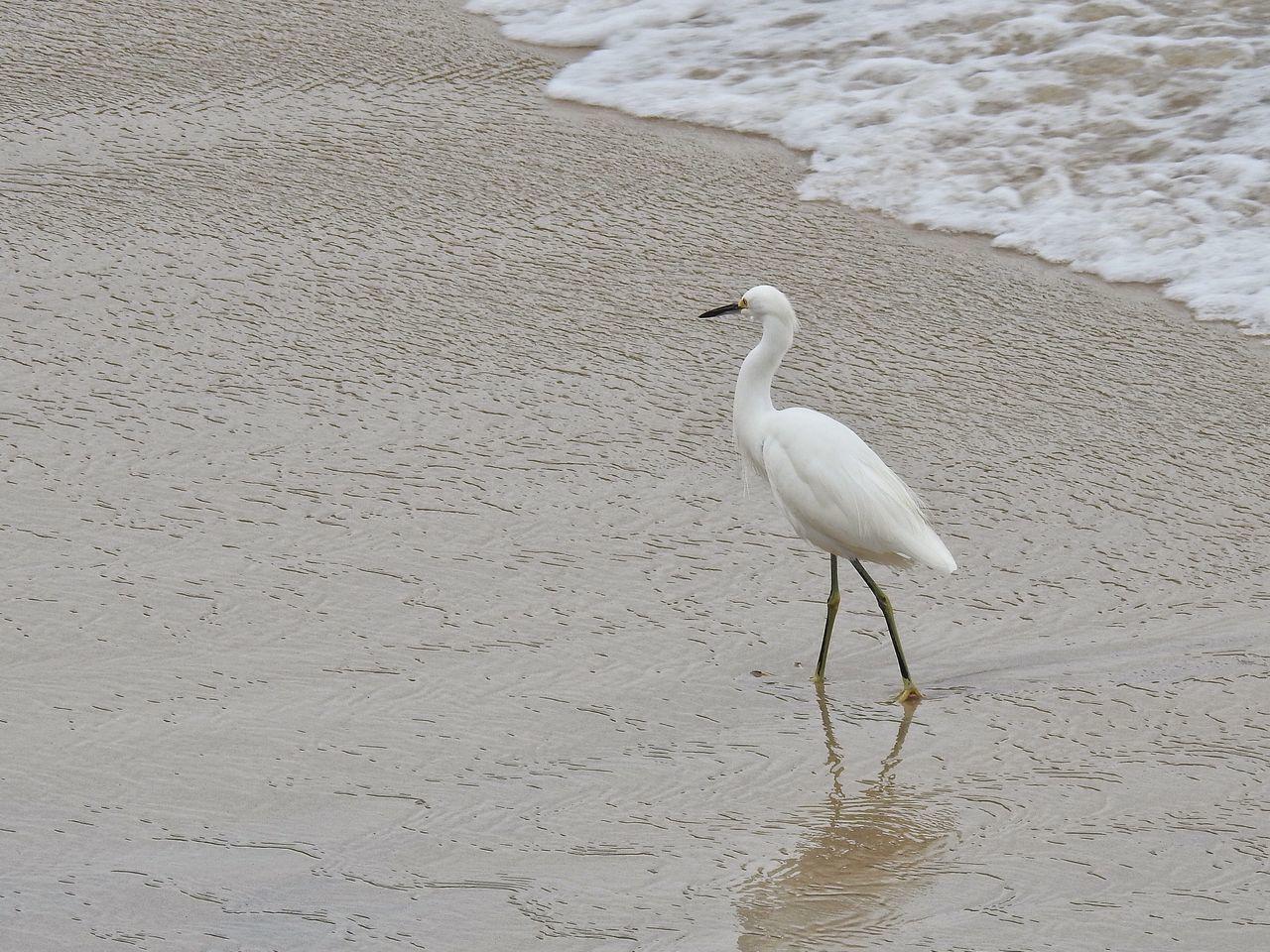 Sand Beach Water Garças Caraguatatuba_sp Caragua Caraguatatuba Litoralnorte Litoralsp Litoral
