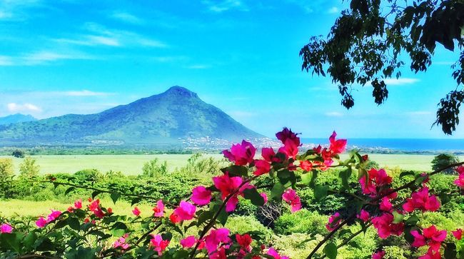 Have a nice sunday Nature_collection Scenery Mauritius Nature Landscape Green Flowers