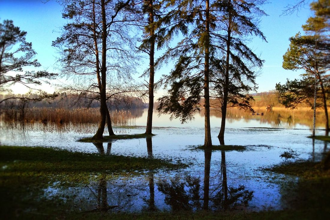 Blue Blue Sky Dusk Evening Evening Light Forest Getting Inspired Lake Lakeshore Light Light And Shadow Mirrored Nature Nature Lover Outdoors Reflection Scenics Spirit Tranquil Scene Tranquility Tree Trees Water The Great Outdoors - 2016 EyeEm Awards