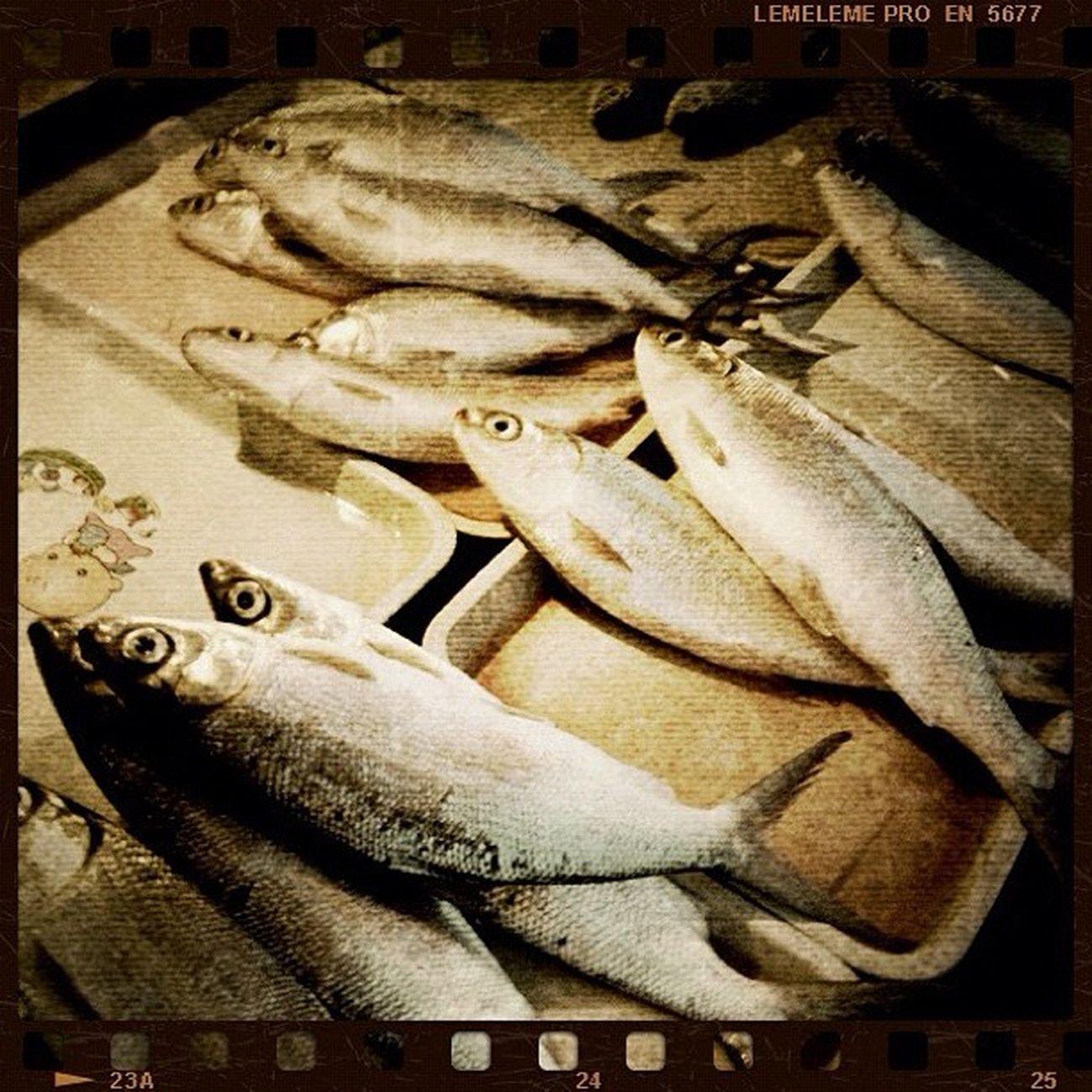I smell somethin' Fishy . Bangus Milkfish Iloilo igersiloilo igersolongapo igersmanila igers jj jj_forum tbt fish foodpoc photodaily