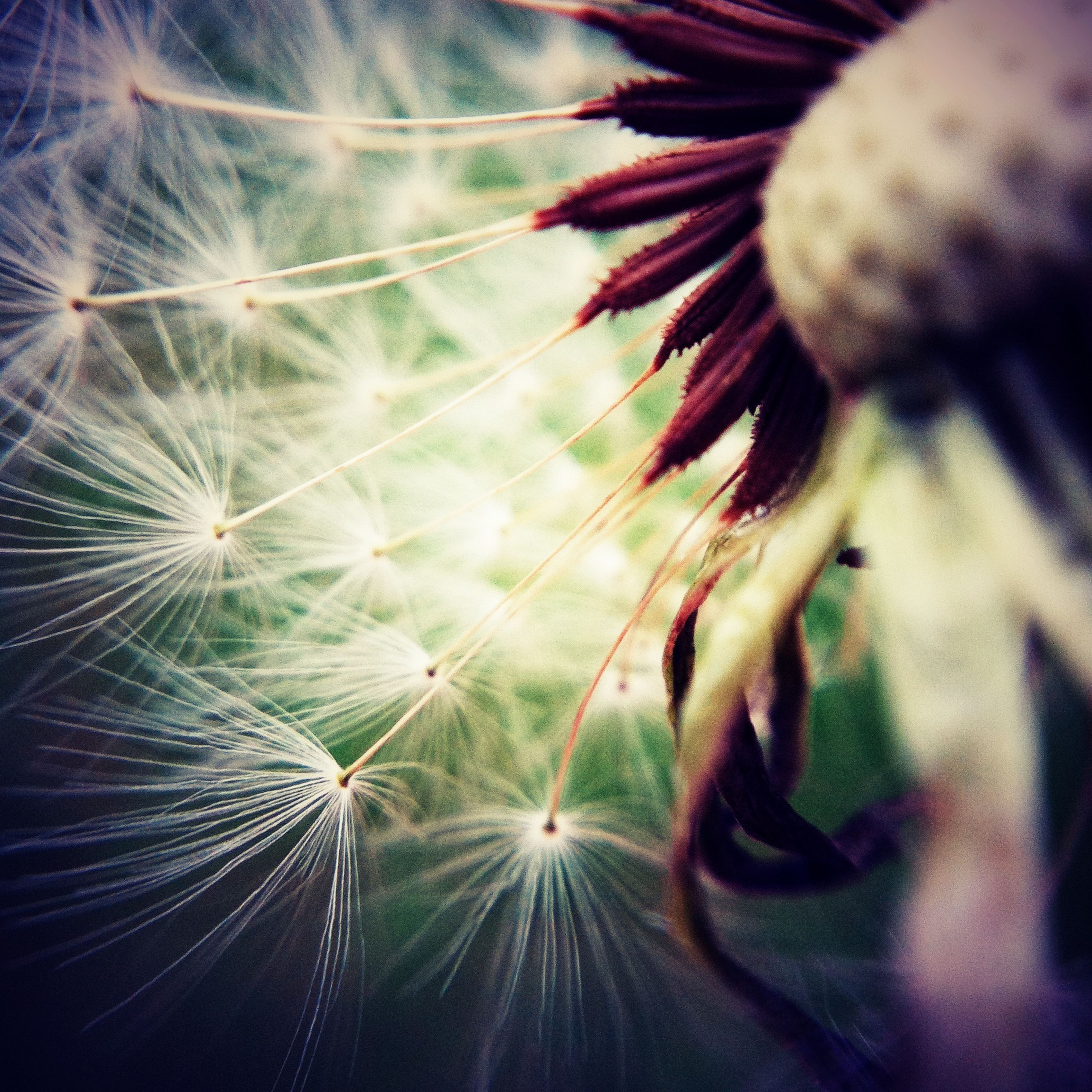 flower, dandelion, growth, fragility, close-up, flower head, nature, beauty in nature, freshness, plant, single flower, softness, no people, outdoors, day, focus on foreground, low angle view, selective focus, full frame, backgrounds