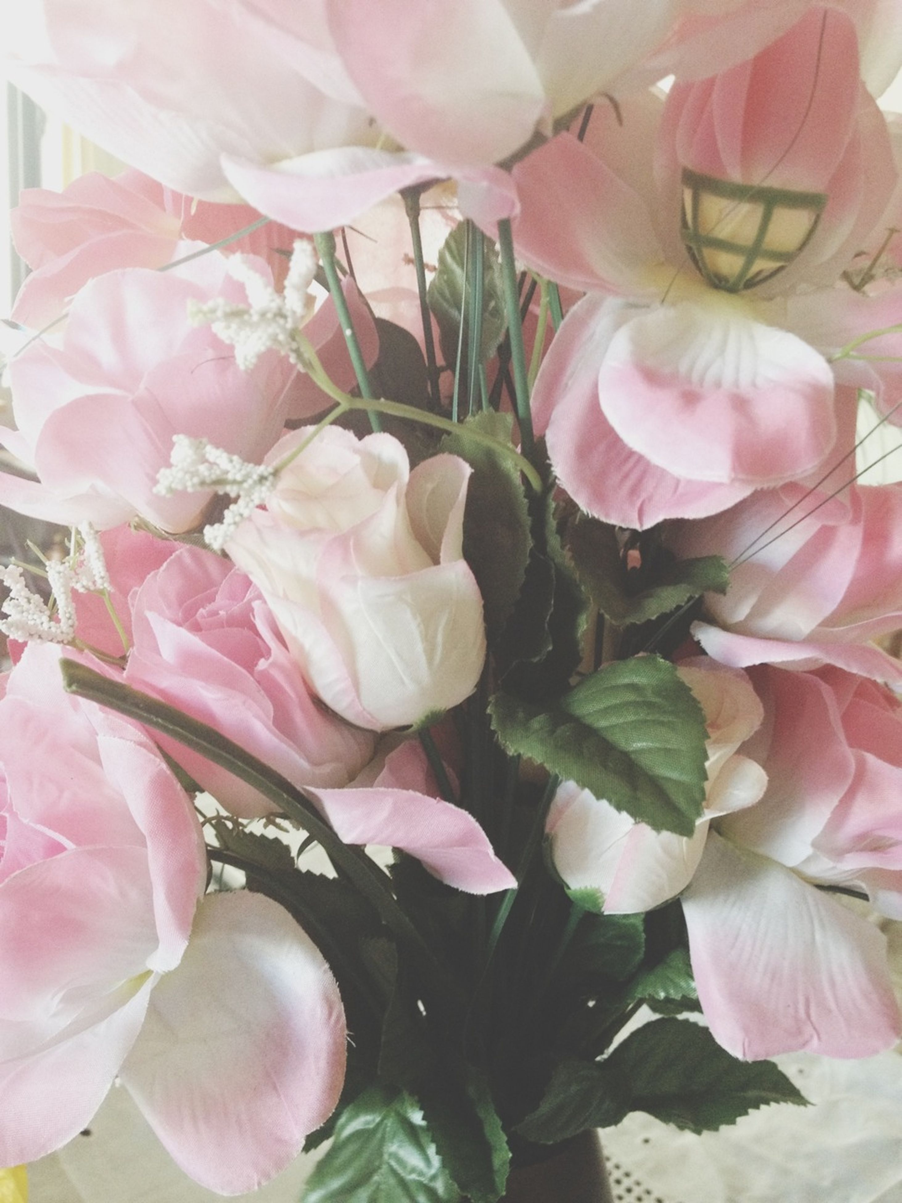 flower, freshness, petal, fragility, pink color, flower head, growth, beauty in nature, close-up, nature, plant, blooming, pink, in bloom, rose - flower, leaf, blossom, botany, springtime, day