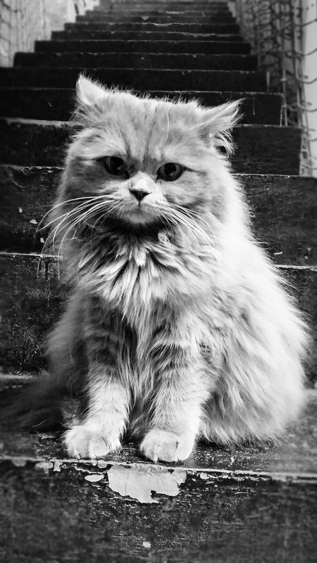 None shall pass Cat Cats Furry Friends Furryfoe Catarazzi London Blackandwhite Londoncatvillage Animals