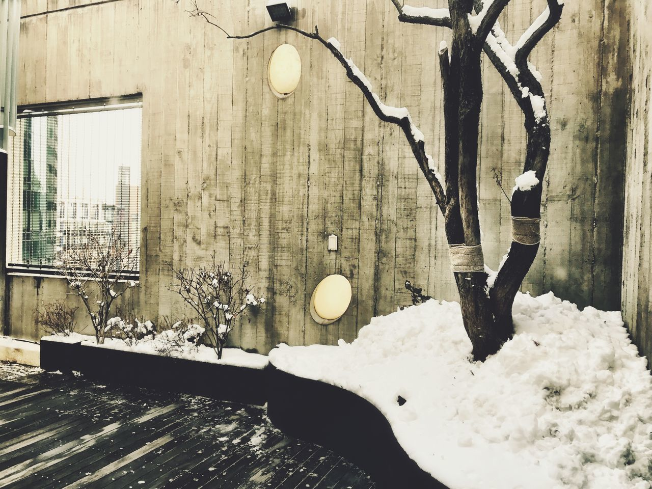 Winter Snow Nature Cold Temperature No People Tree Architecture Built Structure Outdoors Day Beauty In Nature City Garden Tree Snow ❄ Cheongdamdong Shotoniphone7 IPhoneography Urbanphotography Rooftop