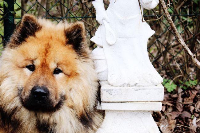 Dog Cute Animals Love Dogs Brumbo Dogslife Beauty ❤ Summer