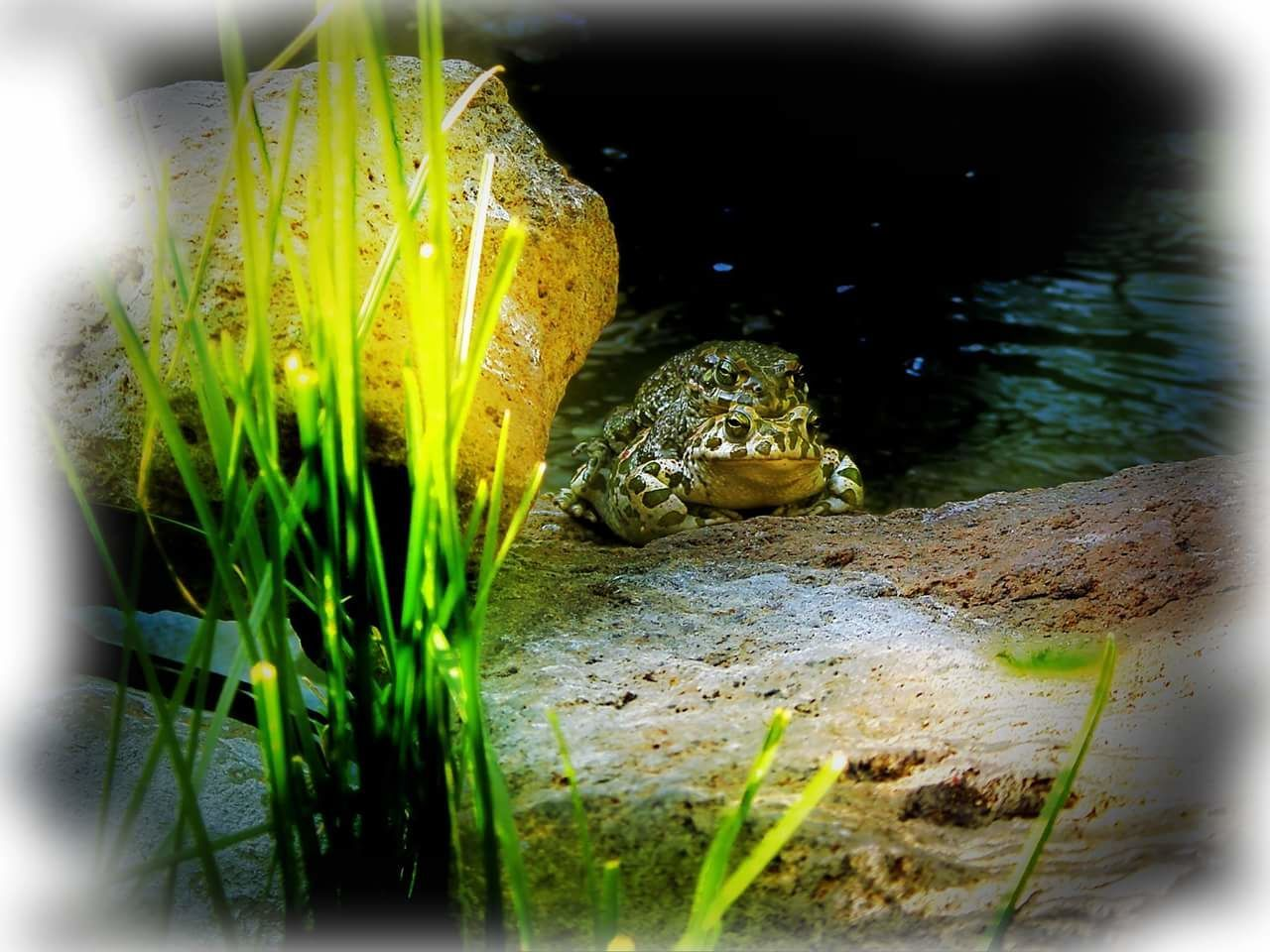 Water No People Nature Close-up Nature Outdoors Animal Themes Animals Frogs Frog Love