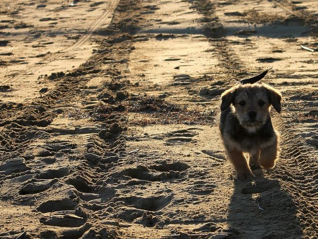 Puppy Joyce Lignanosabbiadoro Sunday First Eyeem Photo