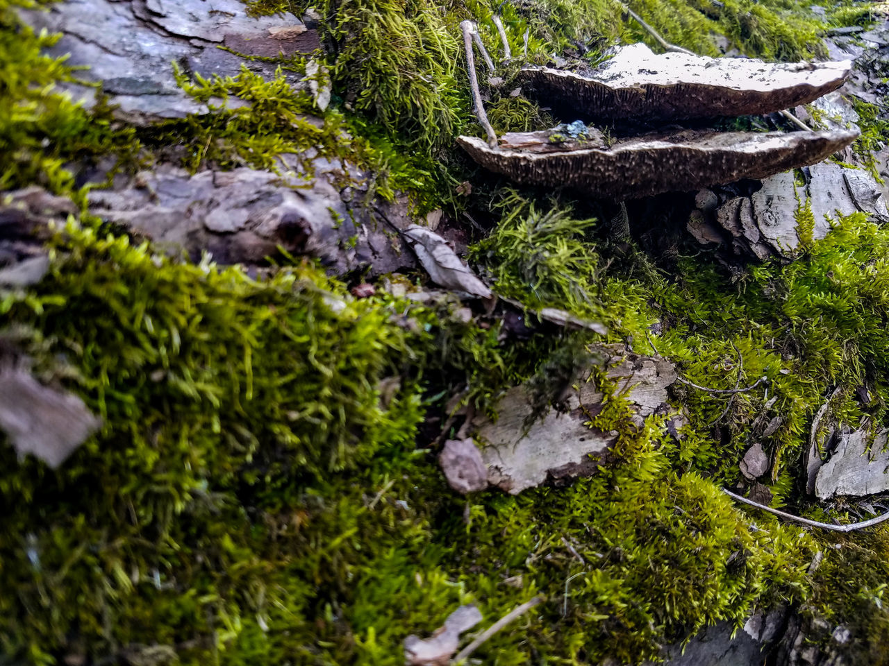 Nature No People Outdoors Day Tree Close-up Forest Overgrown Fallen Tree Fungus Mushrooms Mossy Moss March Spring Springtime Nature Park  Crow River Nature Park PaynesvilleBark Of A Tree Green Color Beauty In Nature Plant Minnesota Growth