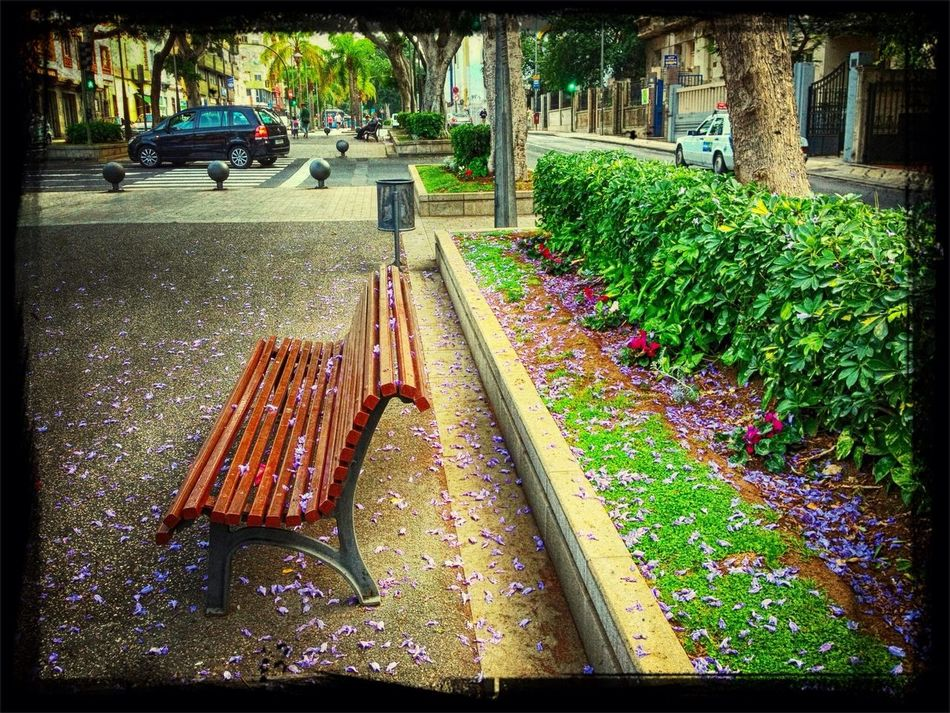 At The Park Sitting Here Thinking It Through... Purple Flower Street Photography