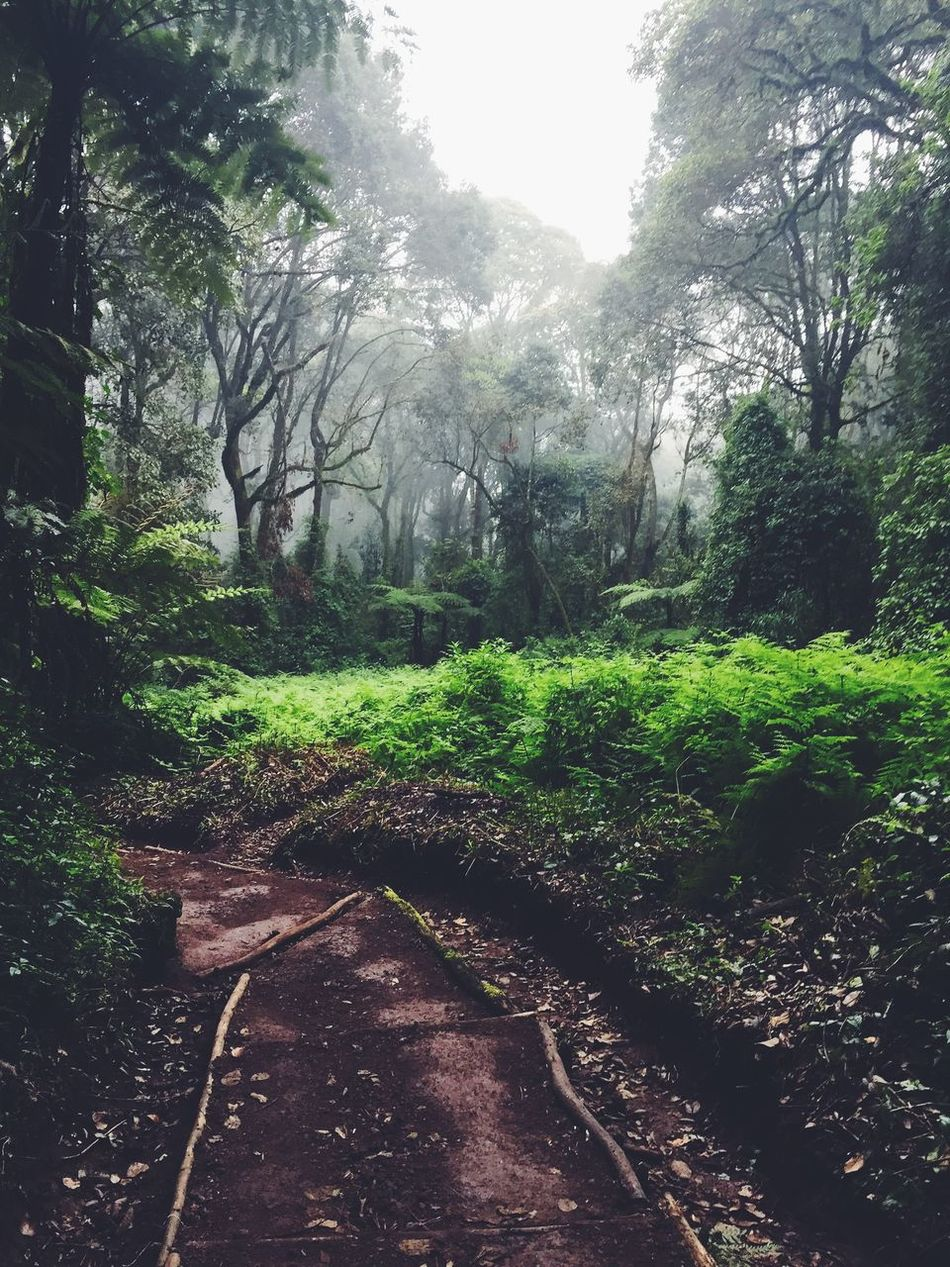 Beauty In Nature Day Diminishing Perspective Forest Grass Green Green Color Growth Idyllic Landscape Lush Foliage Nature No People Non Urban Scene Non-urban Scene Outdoors Plant Remote Scenics Sky The Way Forward Tranquil Scene Tranquility Tree WoodLand