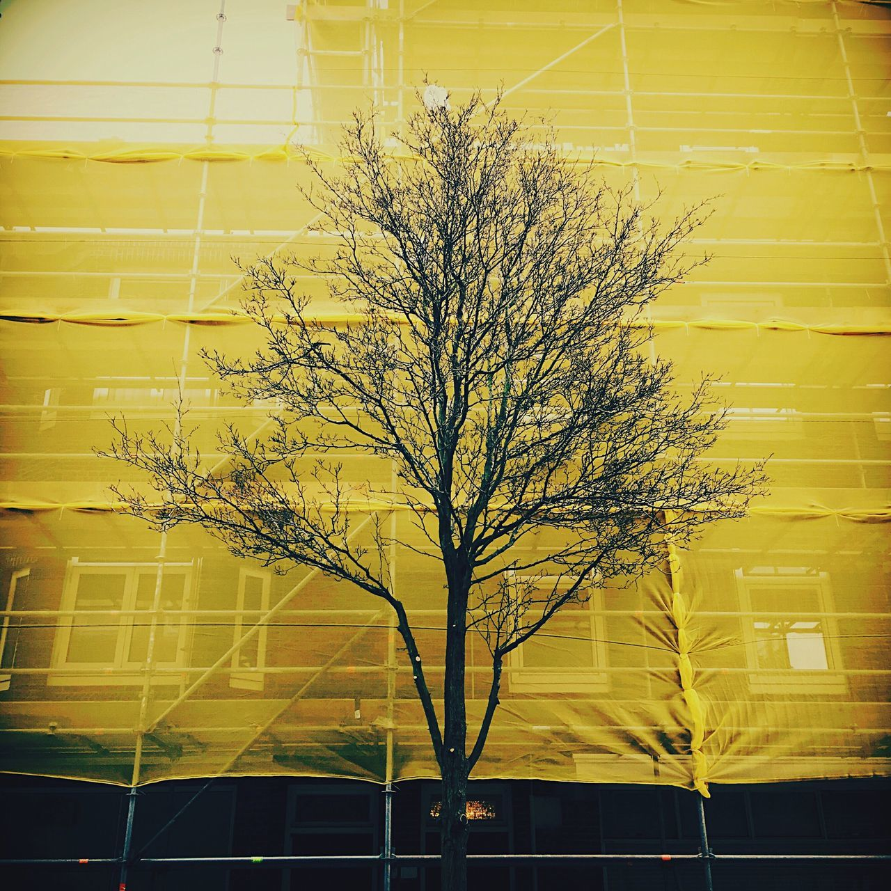 Tree Background Background Texture Background Color Renovation Safety Urbanphotography Urban Nature Scaffolding Scaffold Net Color Palette