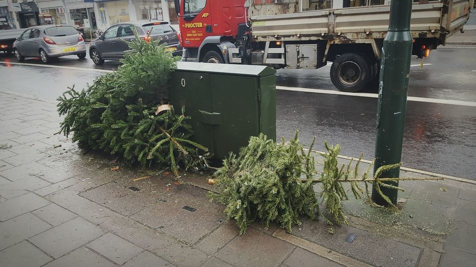 Showcase: January The death of Christmas Trees Christmasisover ChristmasTrees Lifecycle Disillusion Richmond Sadness January Endofholidays Winter Stupid People London Snapshots Of Life
