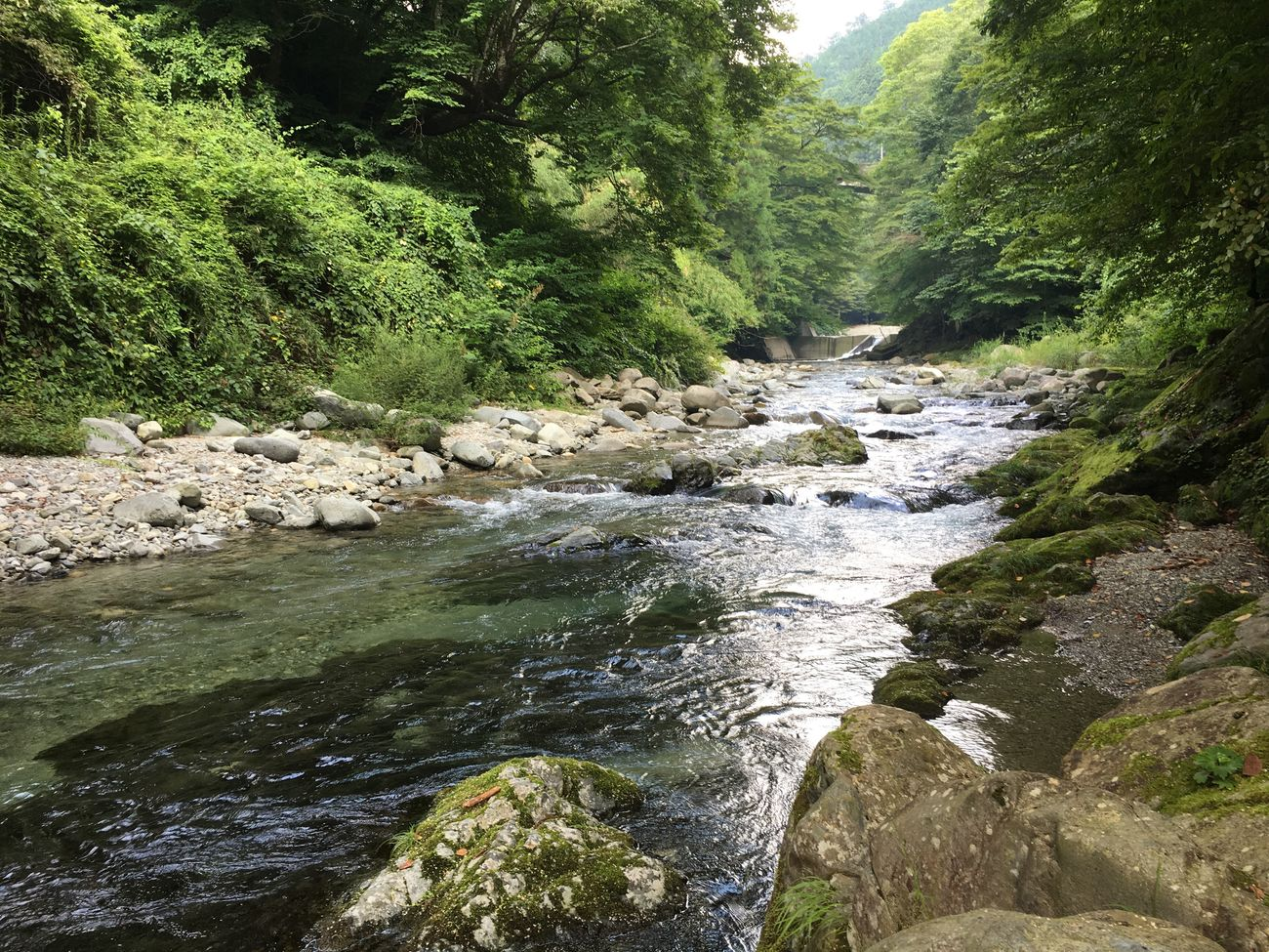 Enjoying Life Hi! 大自然 川 清流 River Enjoy 癒し 緑 Clear Stream Superb View River Swim Happy Forest 風景 Fishing 絶景 Japan Landscape Riverside