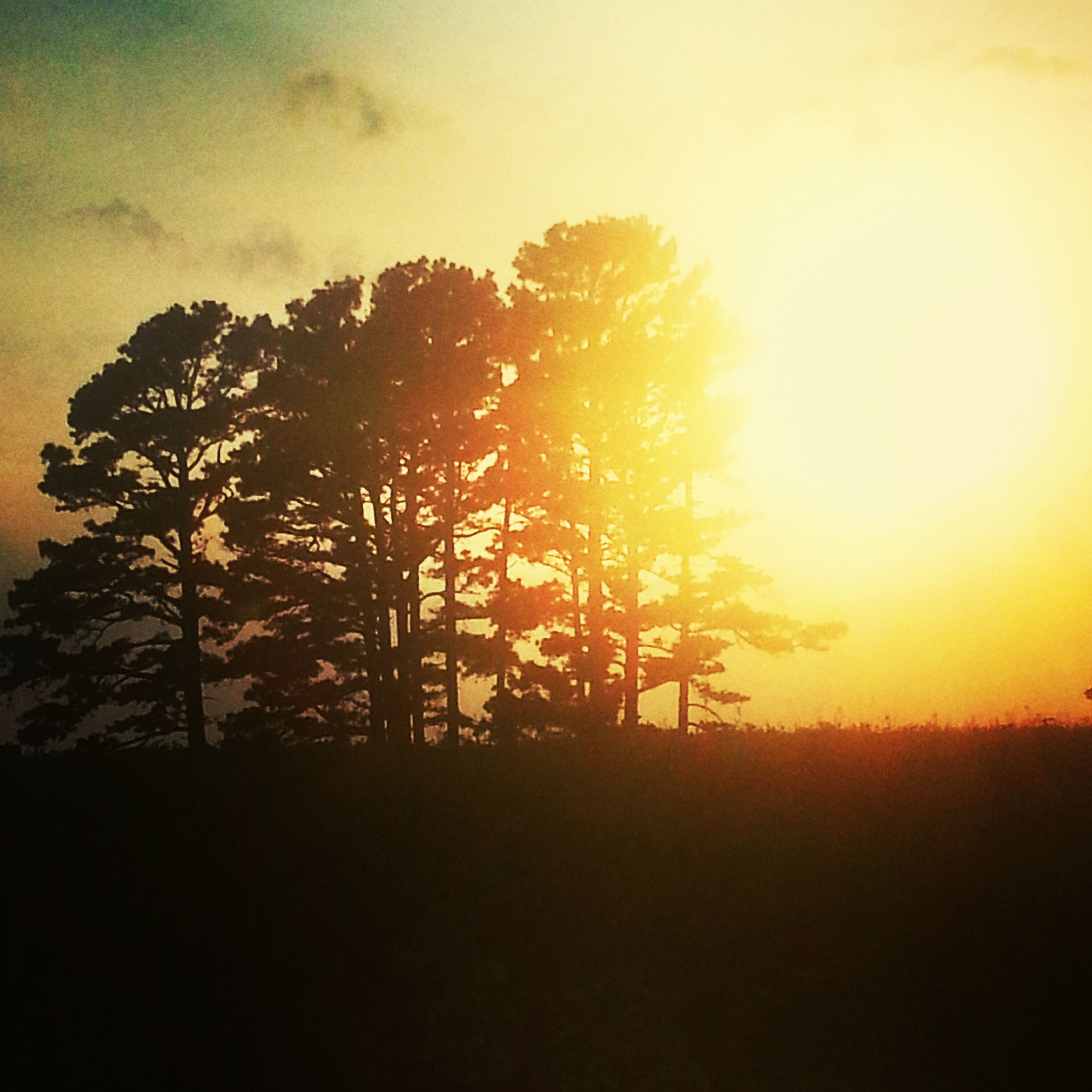 sunset, silhouette, tranquility, tranquil scene, tree, beauty in nature, scenics, landscape, orange color, field, nature, sky, growth, idyllic, outdoors, sun, no people, non-urban scene, plant, sunlight
