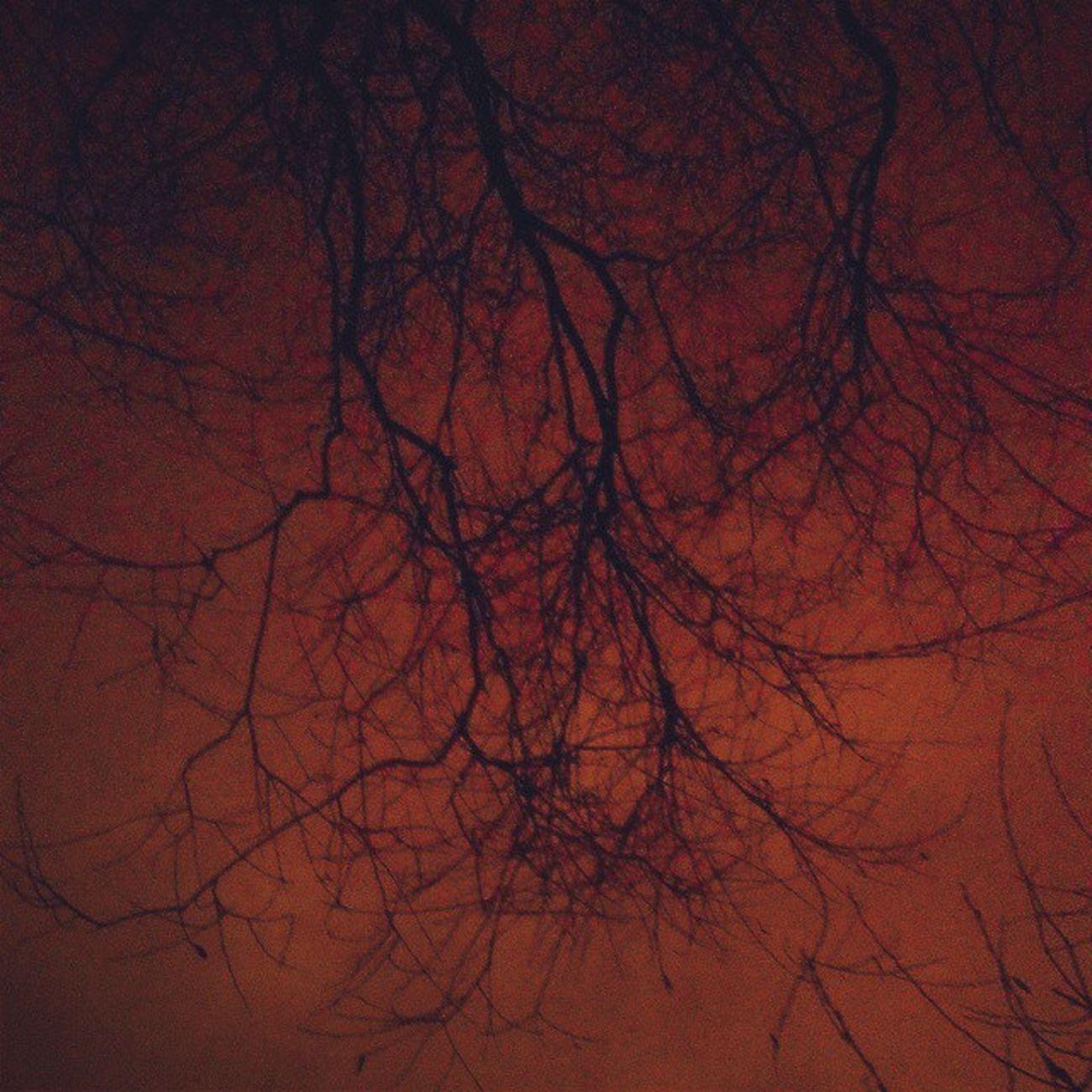 Разрушить паутину вен. Забыться... движеньем резким всколыхнуть тягучий свет, секунды лишней не жалеть. Проститься... И сгинуть в листопаде бренных лет. Postrock Witchhouse