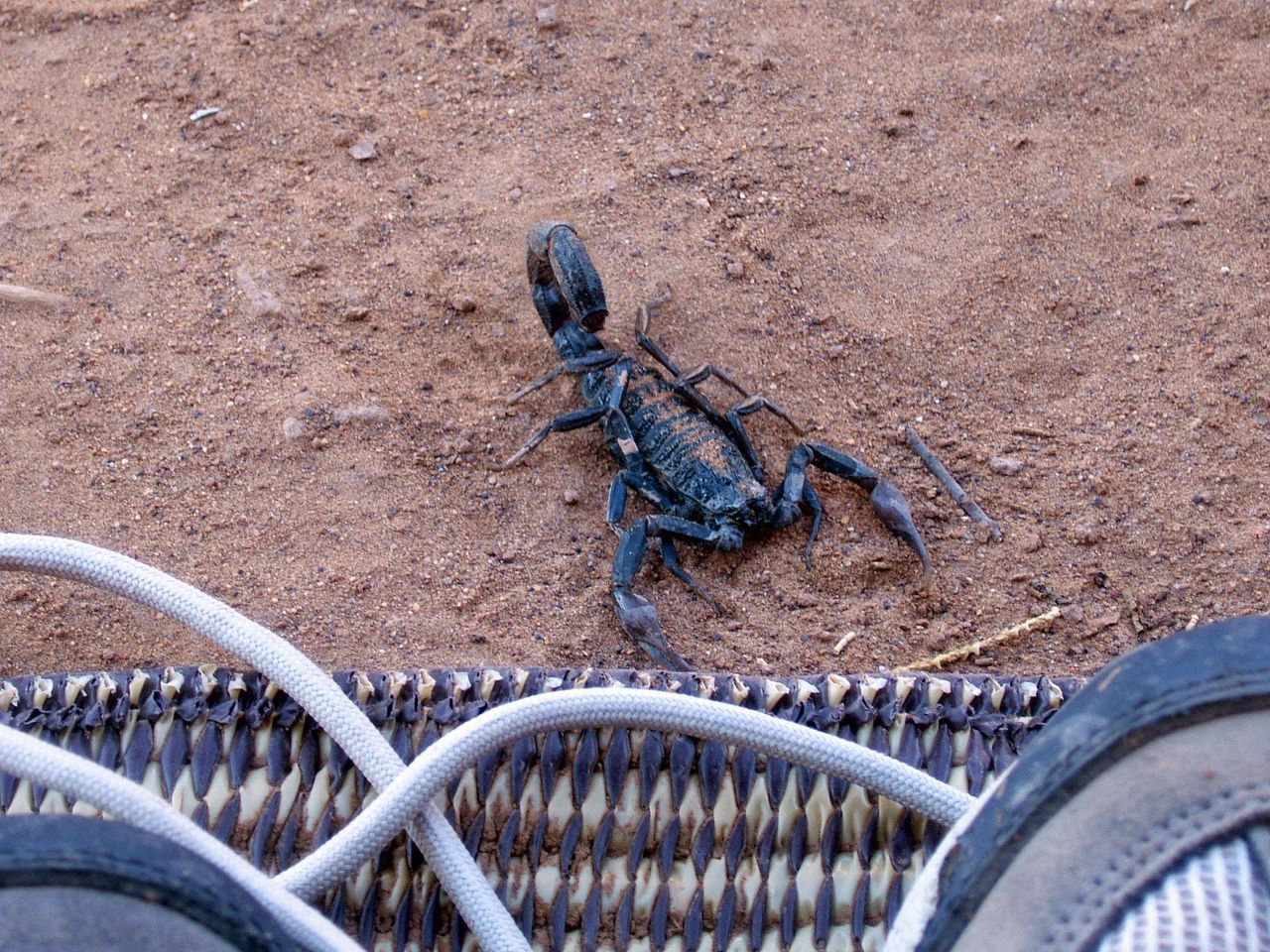 Animal Themes De Hiking Shoes In Point Of View Poison Scorpion Scorpions Water