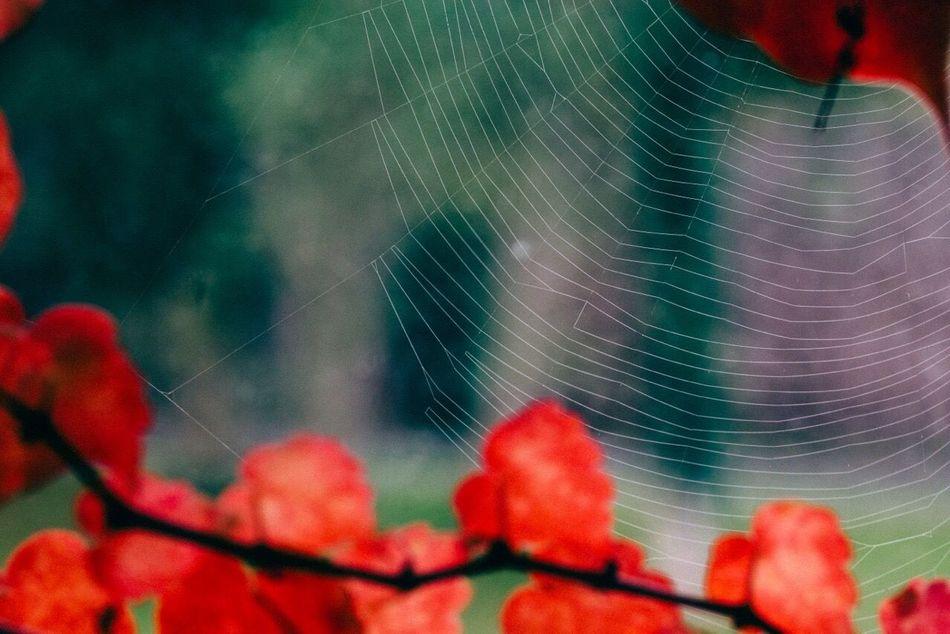 Maximum Closeness Flowers,Plants & Garden Flowers, Nature And Beauty Autumn Leaves