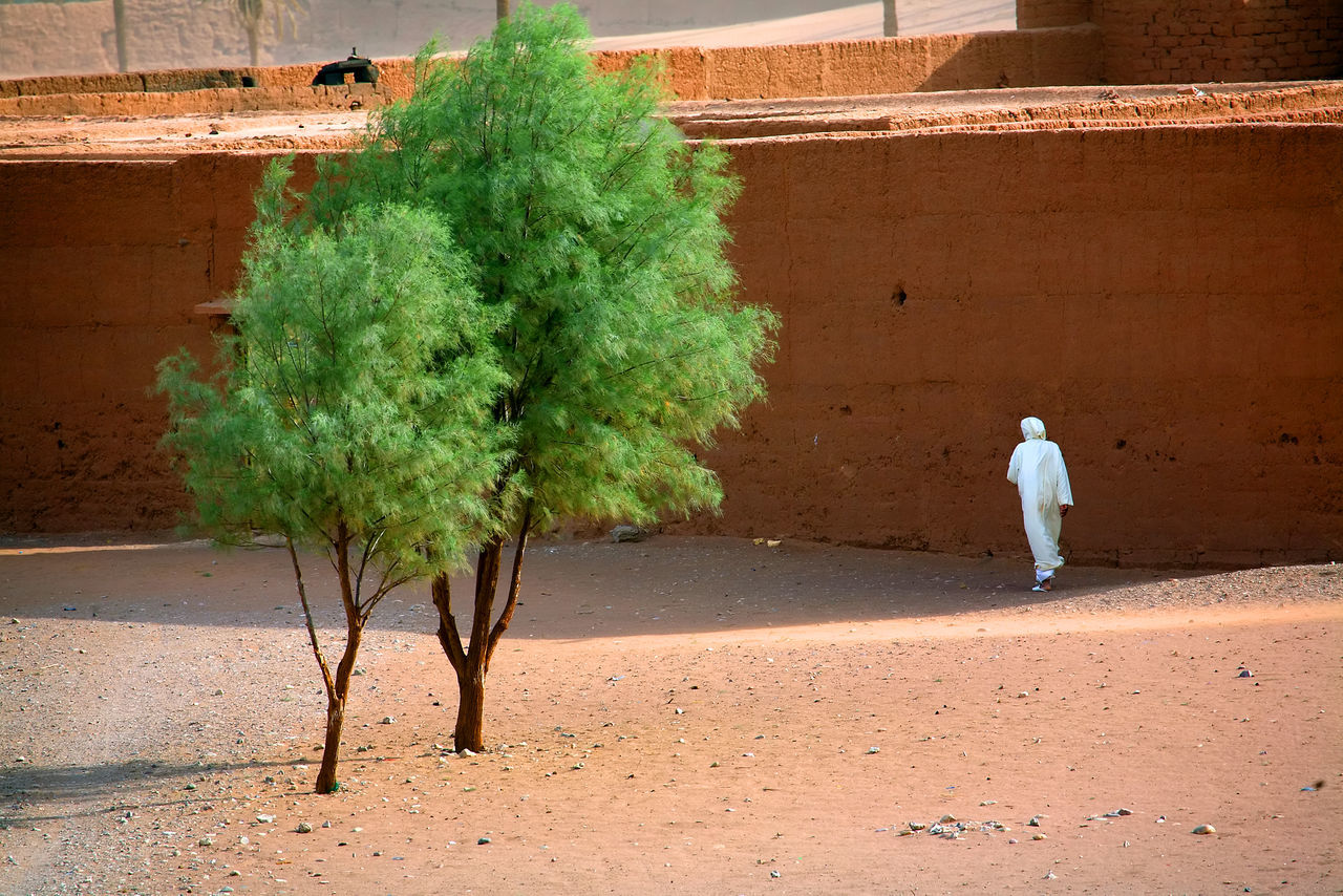 Africa Architecture Building Exterior Built Structure Day Full Length Kasbah Medina Men Nature One Person Outdoors People Plant Real People Rear View Sahara Sahara Desert Standing Tree Village