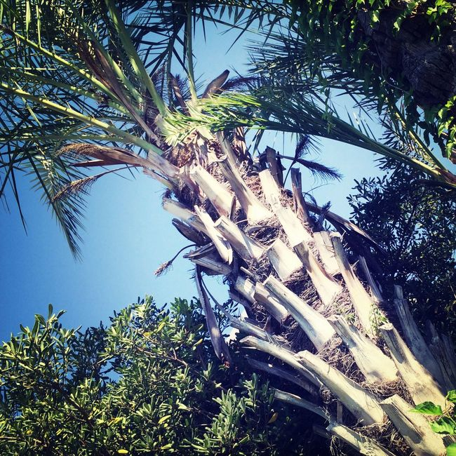 Summer Palm First Eyeem Photo