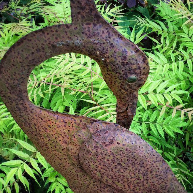 My Garden Nature Photography Green Garden Photography Nature EyeEm Nature Lover Nature_collection