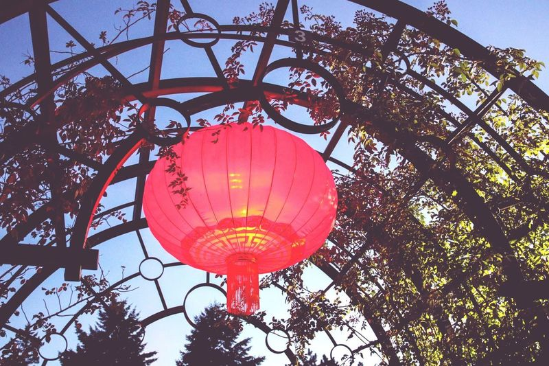 Jardin Botanique Botanical Gardens Canada Canada 150 Low Angle View Hanging Lantern Chinese Chinese Lantern Festival Gardens Of Light