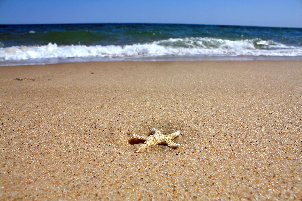 Cape Cod Starfish at Truro © Christopher Seufert Photography Cape Cod Massachusetts Cape Cod, MA National Seashore Ocean Sand Starfish  Starfish At Beach Summer Truro