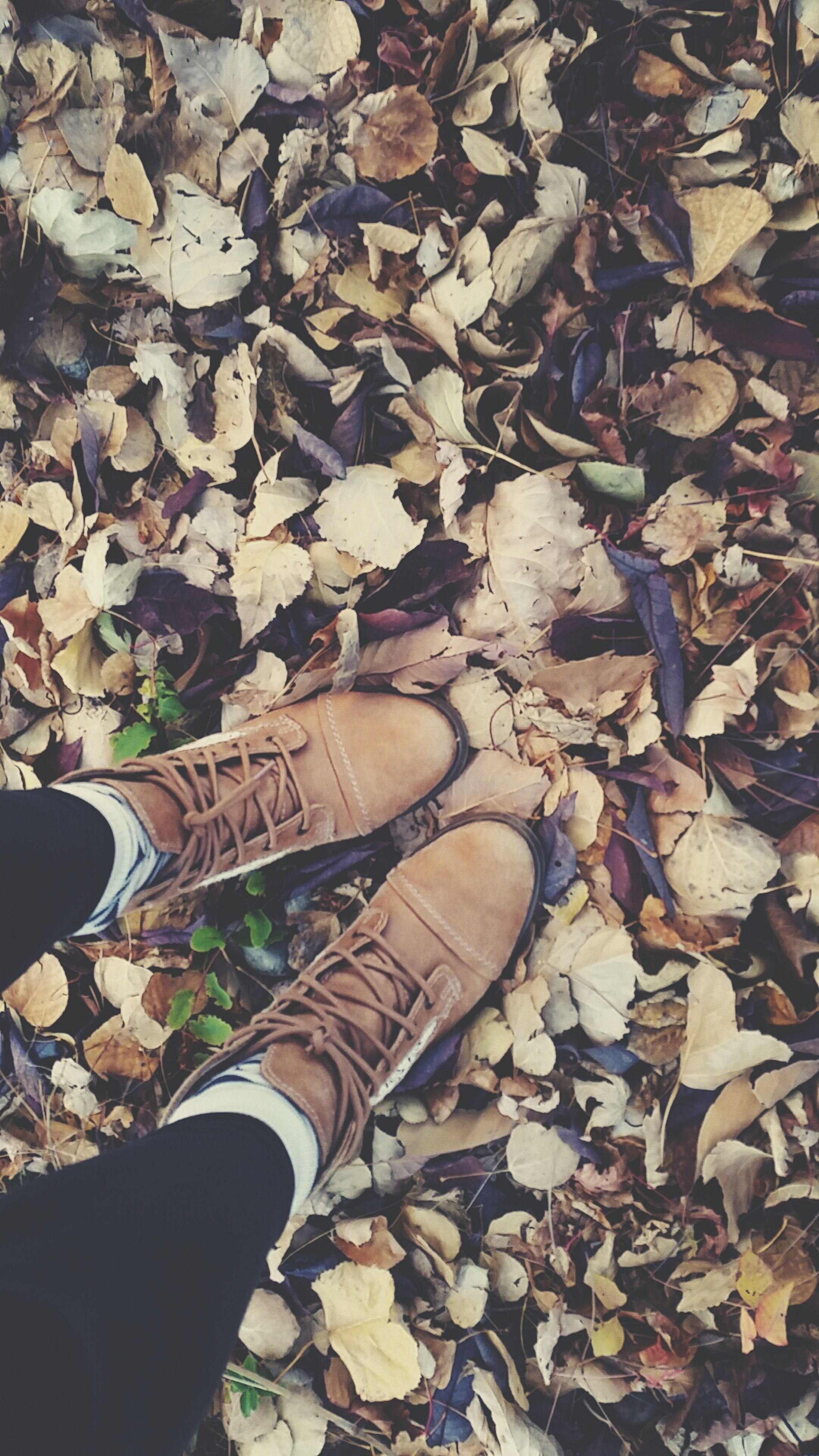 leaf, high angle view, shoe, abundance, autumn, dry, low section, field, fallen, outdoors, nature, day, leaves, large group of objects, personal perspective, stone - object, change, close-up, person, ground