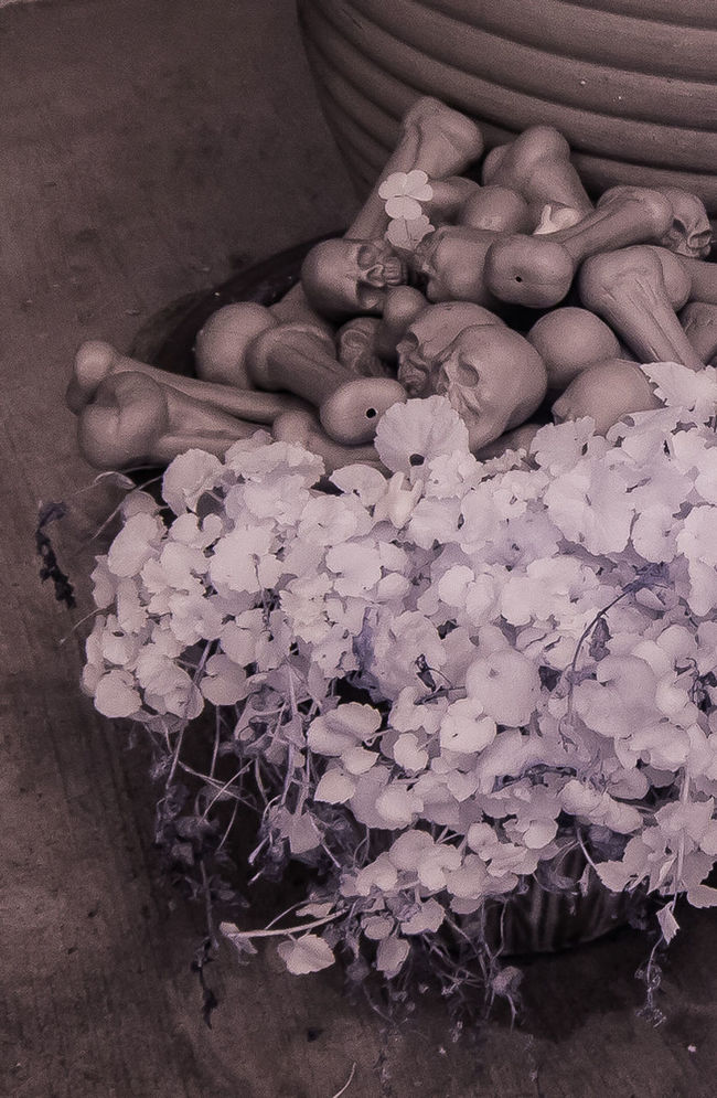 infrared Close-up Color Infrared Flower Freshness Infrared Photography No People Plants