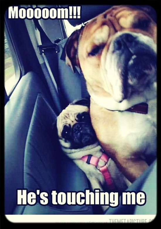 Lmao. Hi! Pug Love Nothing But Smiles! Live, Love, Laugh