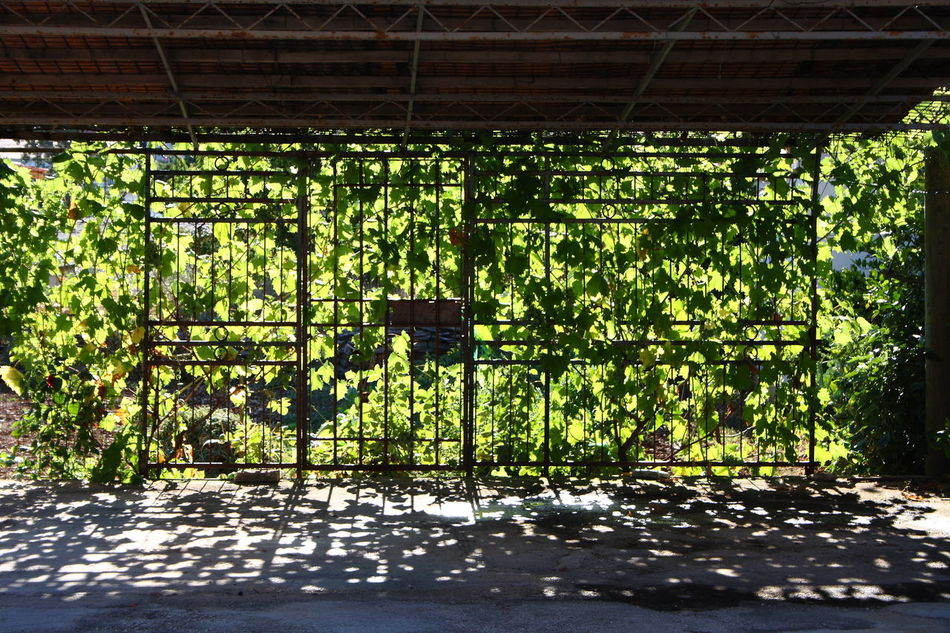 Dappled drive Car Parking Carport Cool Shadow Cool Shadows Dappled Dappled Light Dappled Sunlight Drive Drive Way Driveway Driveways Flora Greenery Light Light And Shade Parking Lot Pattern Plants Private Drive Railings Repetition Shadows Sunlight Tropical Climate Vegetation