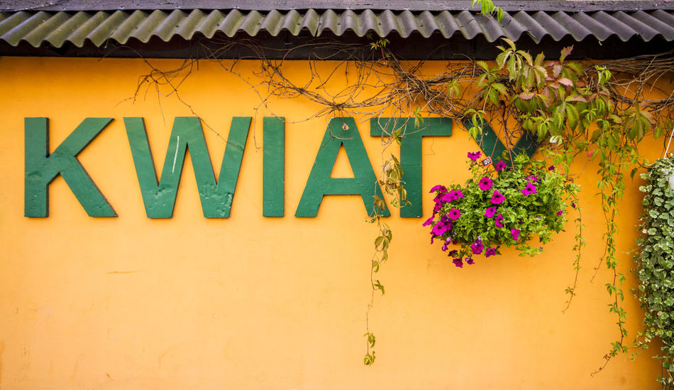 Type hunting Architecture Building Exterior Built Structure Close-up Communication Day Flower Flowers Flowers,Plants & Garden Green Green Color Kwiat Kwiaty Letters No People Outdoors Poland Polish Polish Language Rooftop Text Text Type Warsaw Yellow