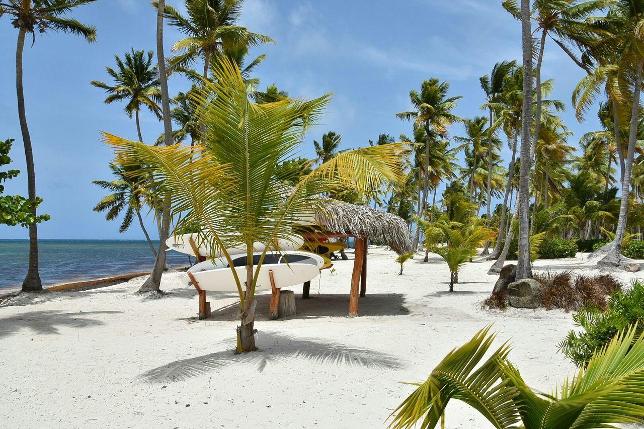 Beautiful stock photos of rio de janeiro, Horizontal Image, beach, coastline, coconut palm tree