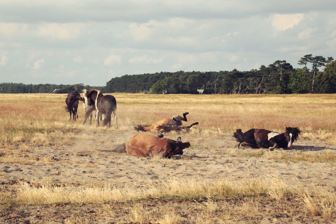 Horses On Grassy Landscape Against Sky