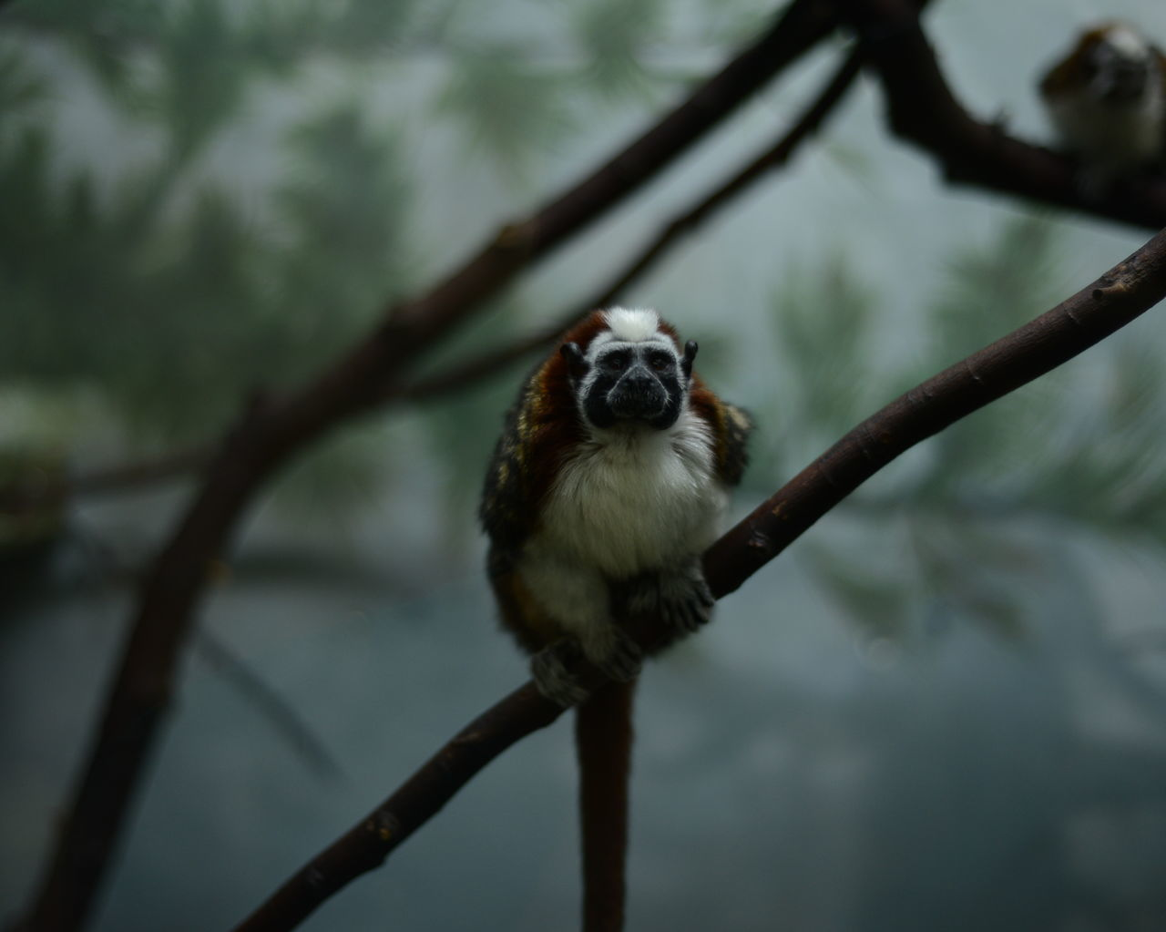 Beautiful stock photos of jungle, Animal Themes, Animals In The Wild, Branch, Day