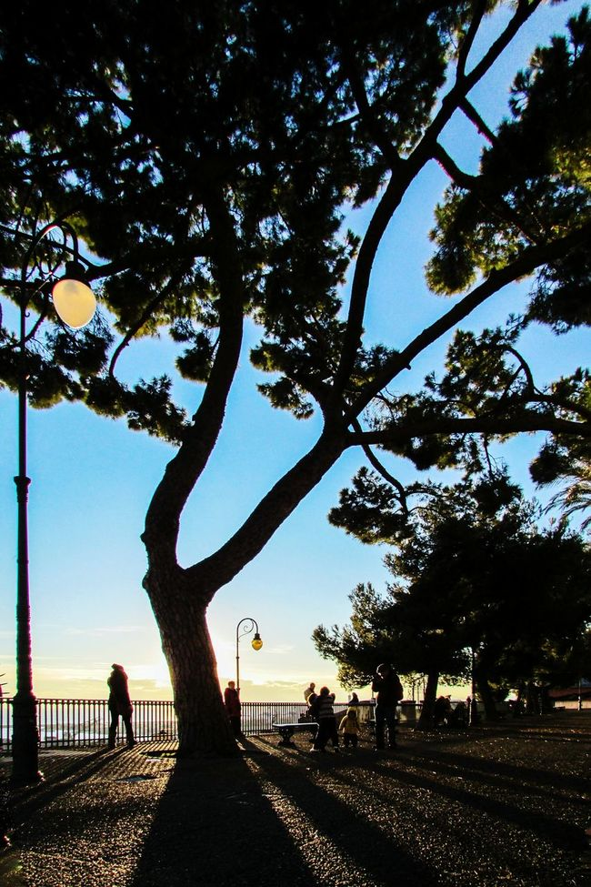 One of my fav place in Genova Tree Silhouette Men Branch Full Length Solitude Tranquil Scene Growth Treelined Nature Tranquility Day Outdoors Sky People And Places Tree_collection  TreePorn Open Edit Fresh 3 Eye4photography  EyeEm Best Shots Light And Shadow