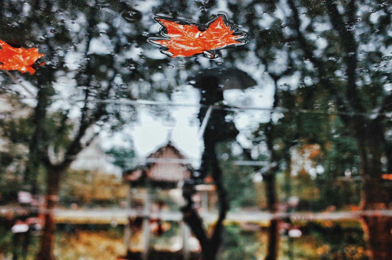 Autumn rain From My Point Of View My Street Photography Shanghai Shanghai Streets Shanghai Photography Shanghailife Street Photography Rainy Days Reflection Autumn Autumn Leaves Shanghai Autumn Water Close-up Architecture Red Leaves Blurred Background Blur Peace And Quiet