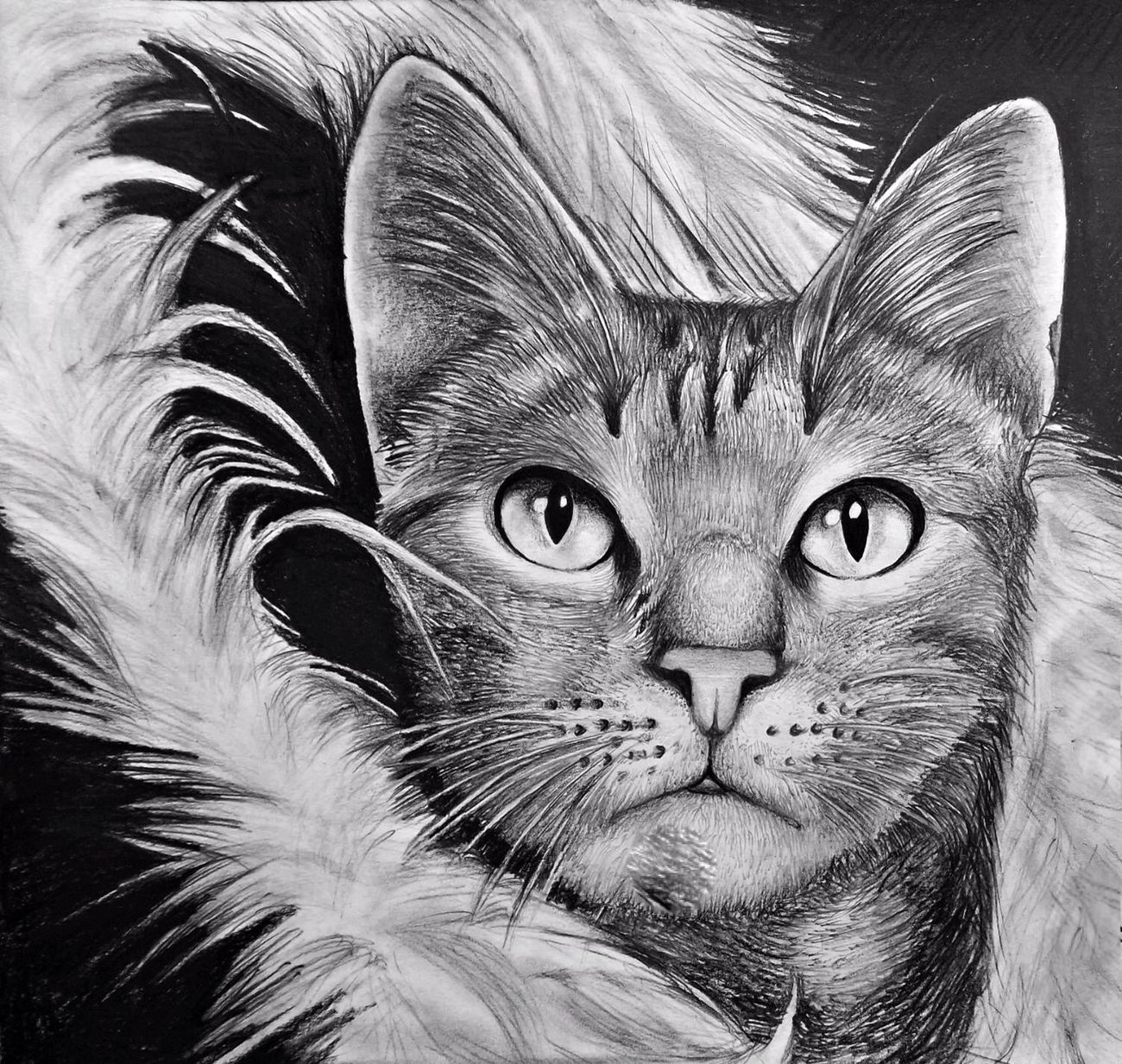 Fat Diva Boy Cat Streamzoofamily Drawing GraphitePencil