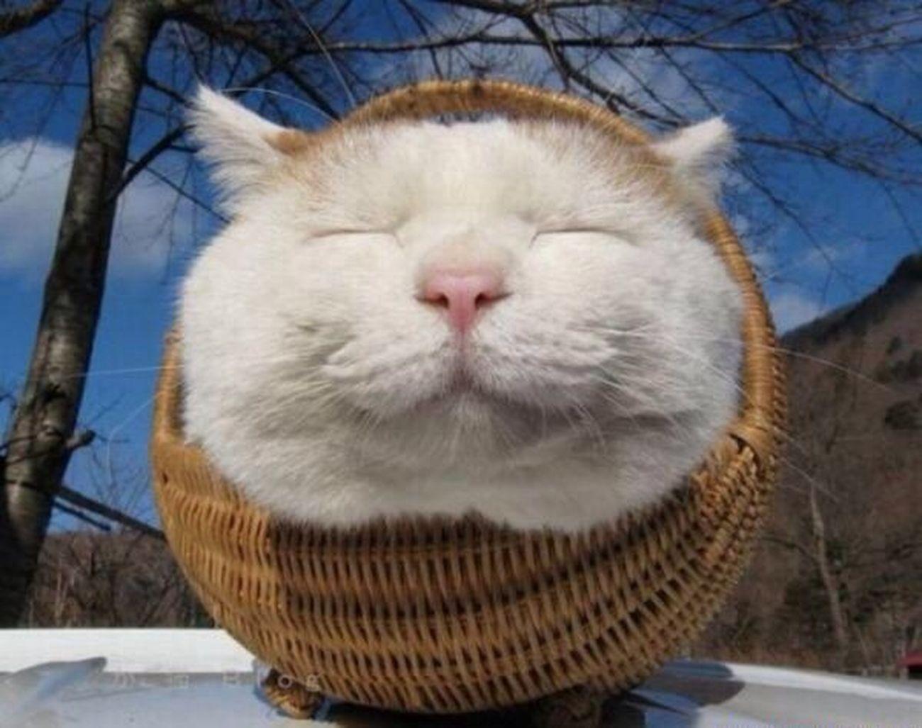 Good morning! Cats Hello World