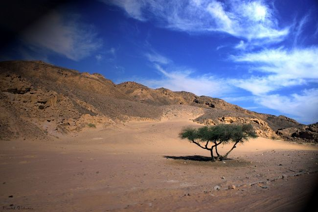 Desert Sand Nature Tree In The Desert Lonely Tree Tree