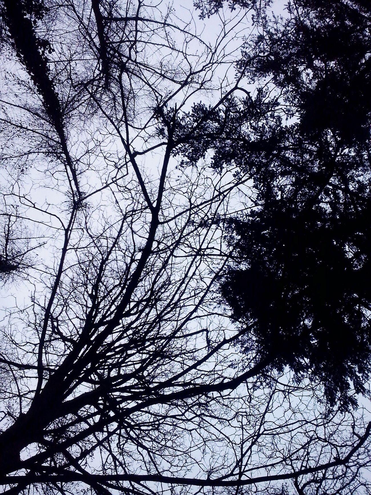Tree Trees Trees And Sky Tree And Sky Malahide  Winter Winter Trees Sky Sky And Trees Dublin Ireland